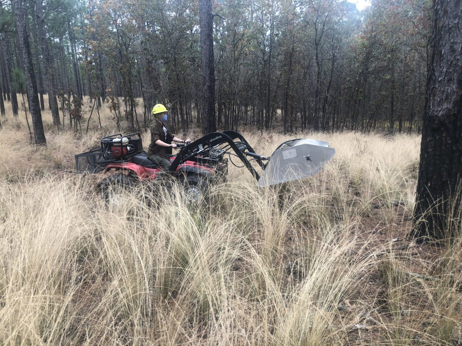 A seed harvester, or flail vac, is crucial in gathering sufficient native seed to conduct native groundcover restoration at scale. Carvers Creek State Park, NC. Photo by Thomas Crate.