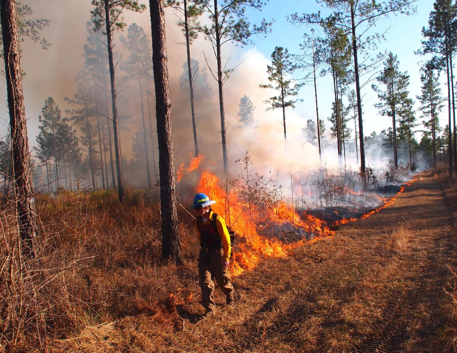 An Orianne Society fire tech lays down a line of fire pulling nicely off the firebreak. Photo by Randy Tate.